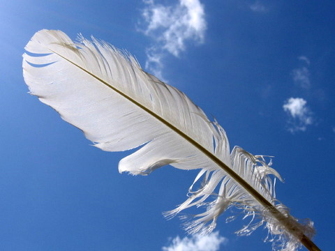 White-Feather-2