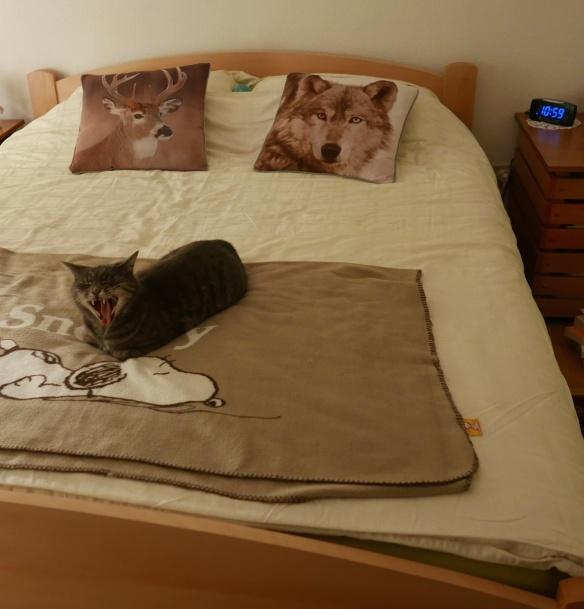 dans mon lit